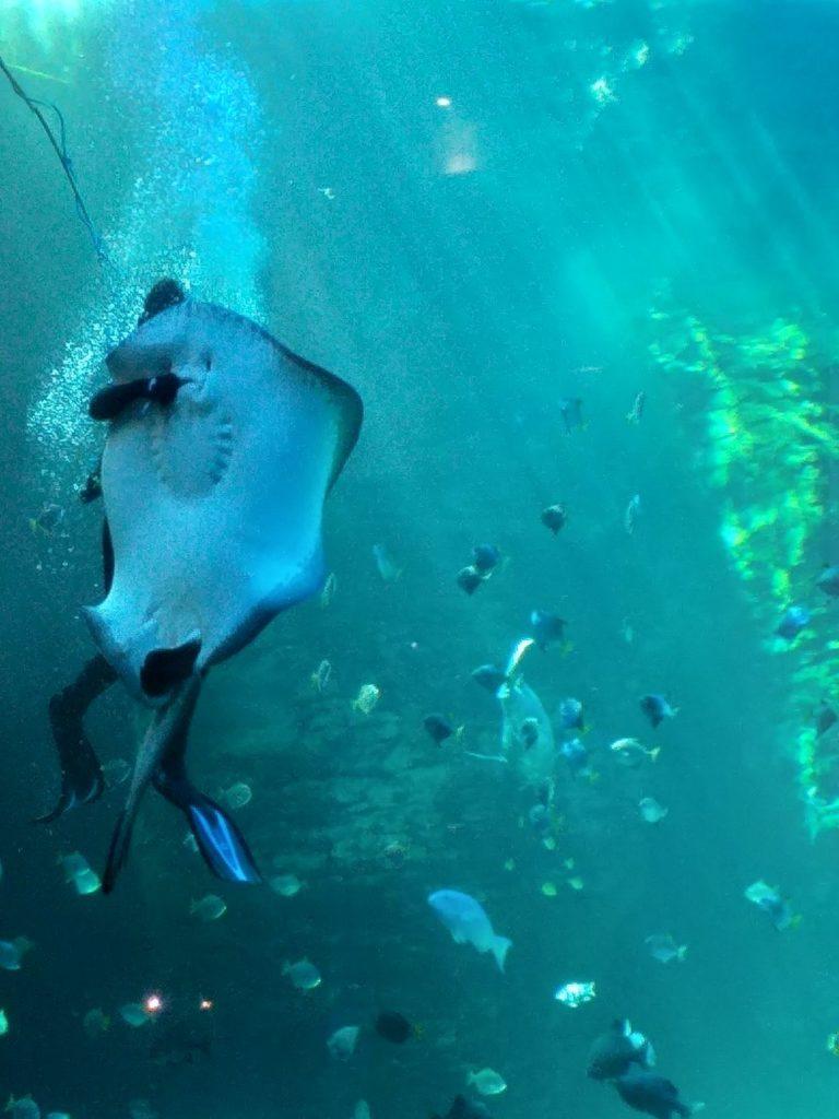 aquarium waterfront