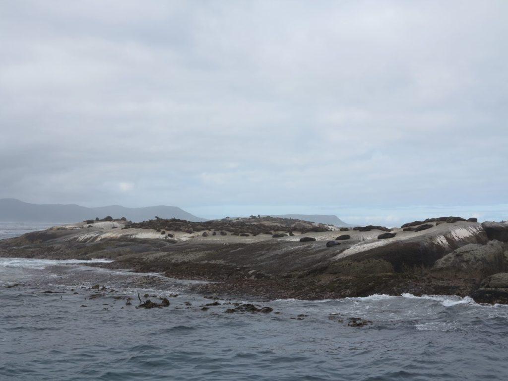 colonie de pingouins à Hout Bay