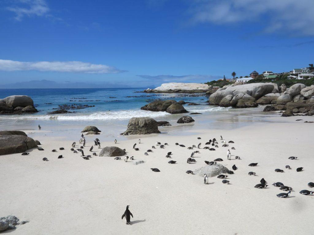 pingouins boulders beach
